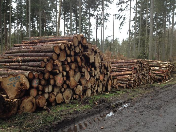 Hier wurde Holz geschlagen