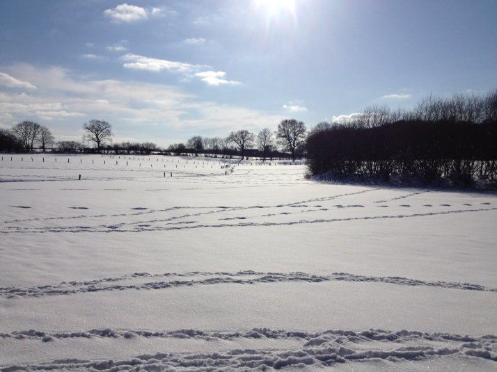 Spuren im Schnee. Rehe fangen leicht gemacht. Und wieso kriege ich die dann nicht?